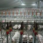 Agrarische industrie